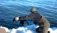 Winter Loon Rescue